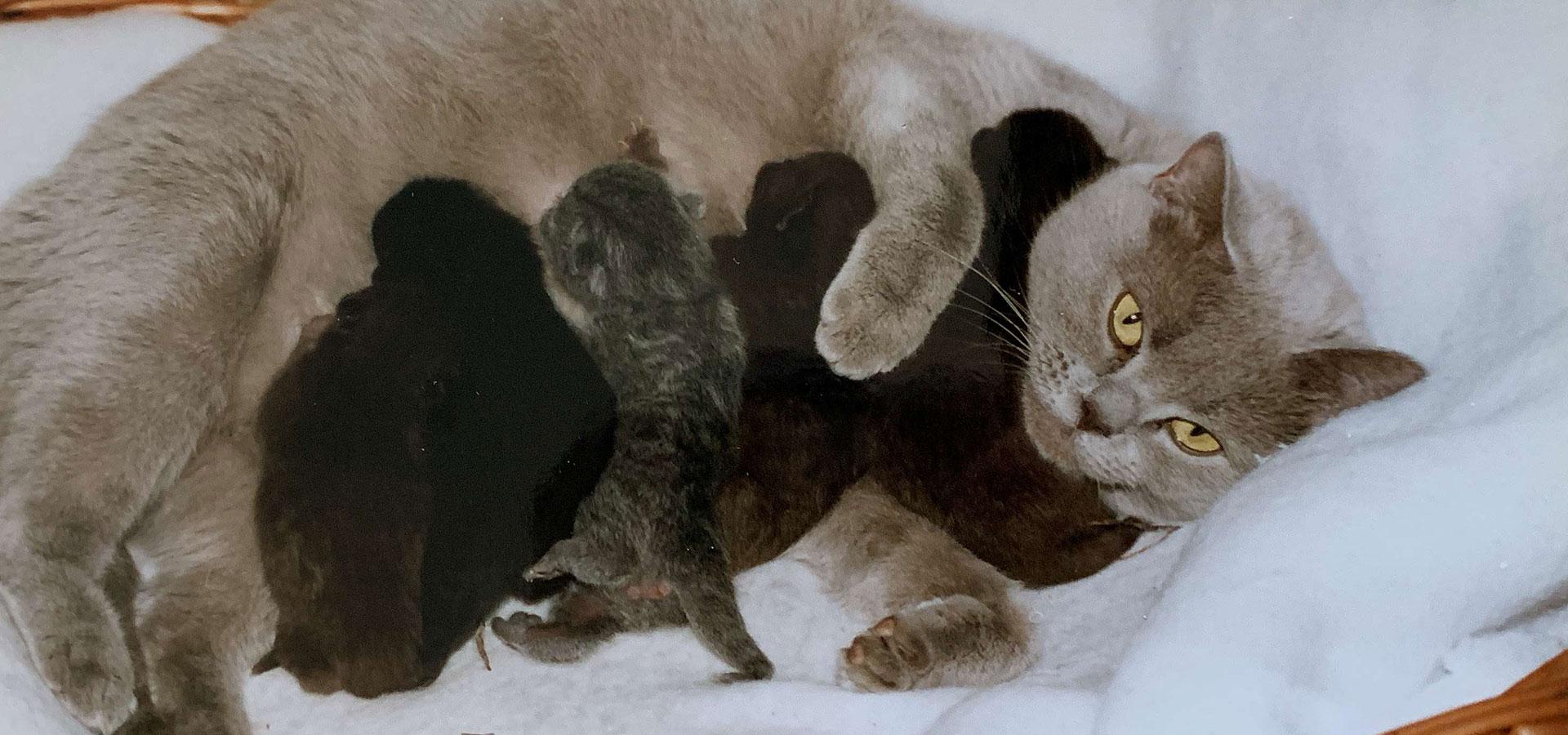 Zazou et ses bébés